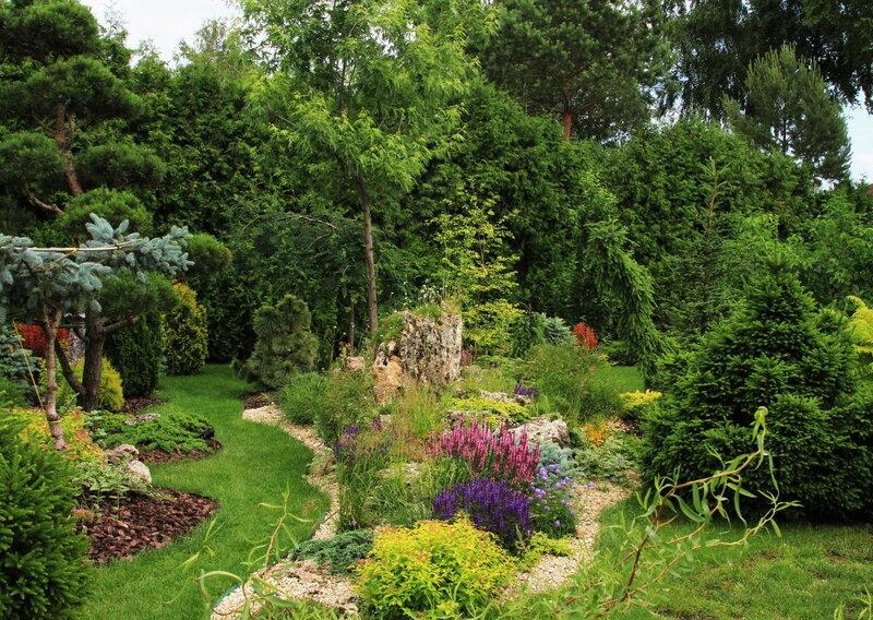 хвойники в саду (фото из инета)