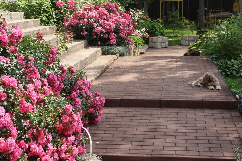 Дивный сад, роз и гортензий и болонок!