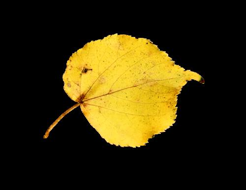 «Autumn Glow» 0_9803d_2eb73df_L