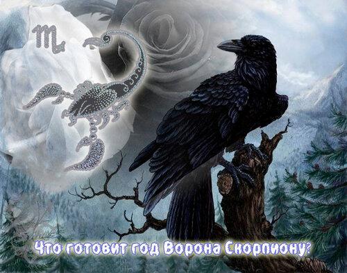 Скорпион в год Ворона