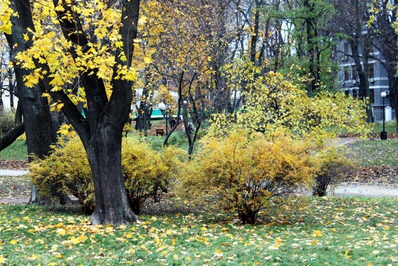 Уголок осеннего Мариинского парка