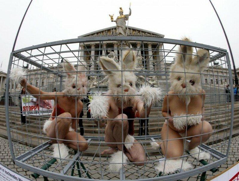 Защитники животных заперлись в клетке посреди Вены