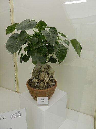 Открылась ежегодная выставка «Комнатные растения»