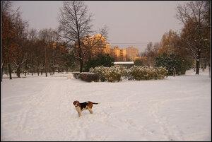 Cанкт-Петербург. Дачное. 31 октября 2012