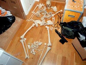 Шведка обвиняется в половой связи со скелетом