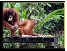 Малайзия. о.Борнео. Фото shatalkin - Depositphotos