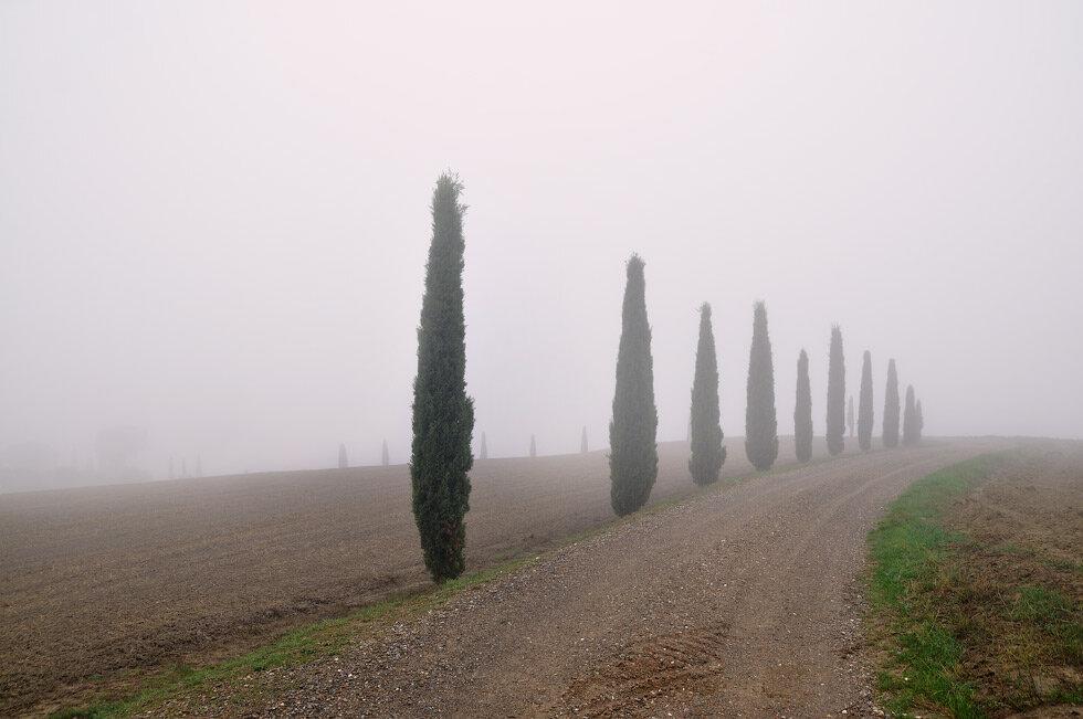 Каждое наше утро в Тоскане начиналось с густого тумана