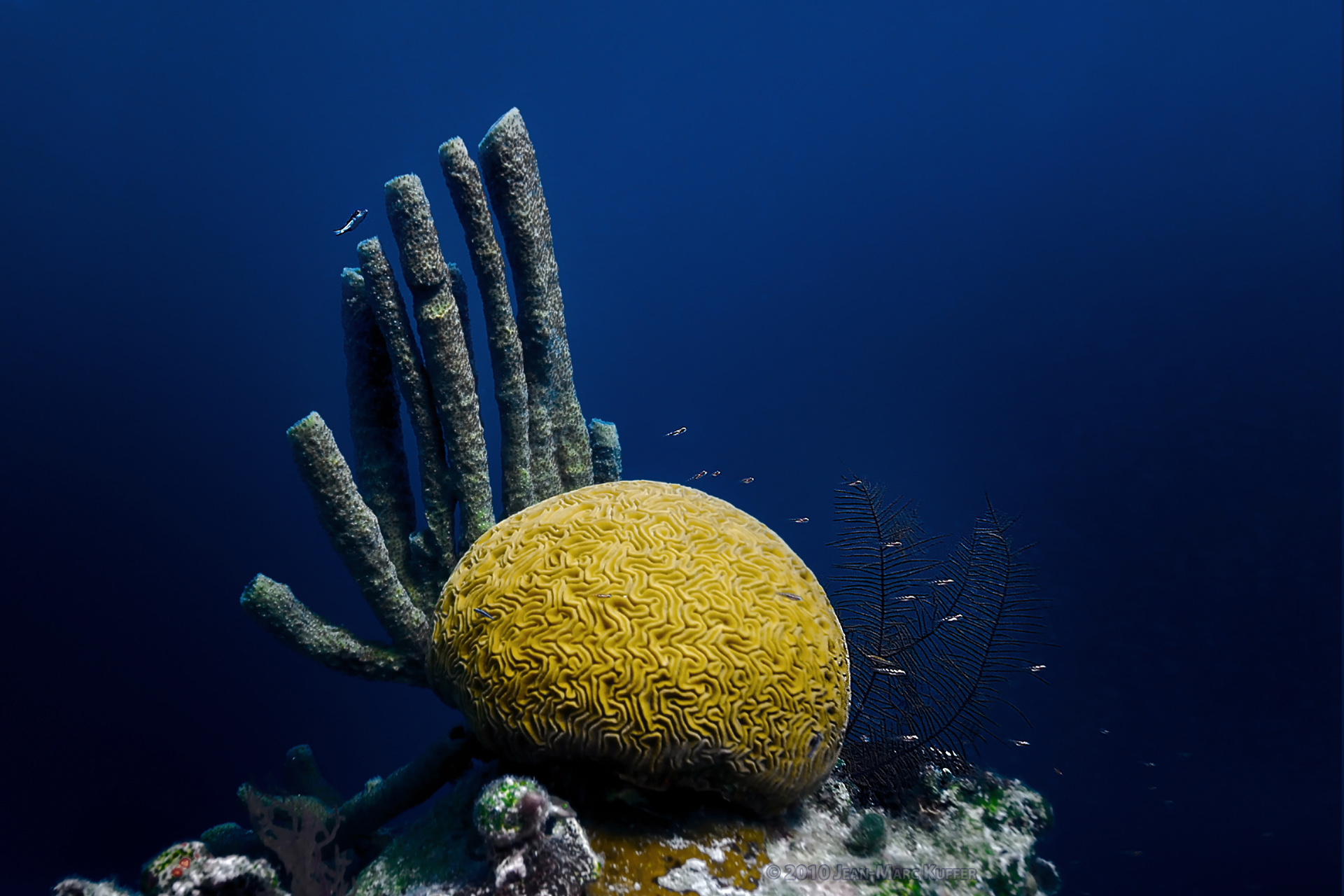 Ocean Brain - Corals of the Great Blue Hole