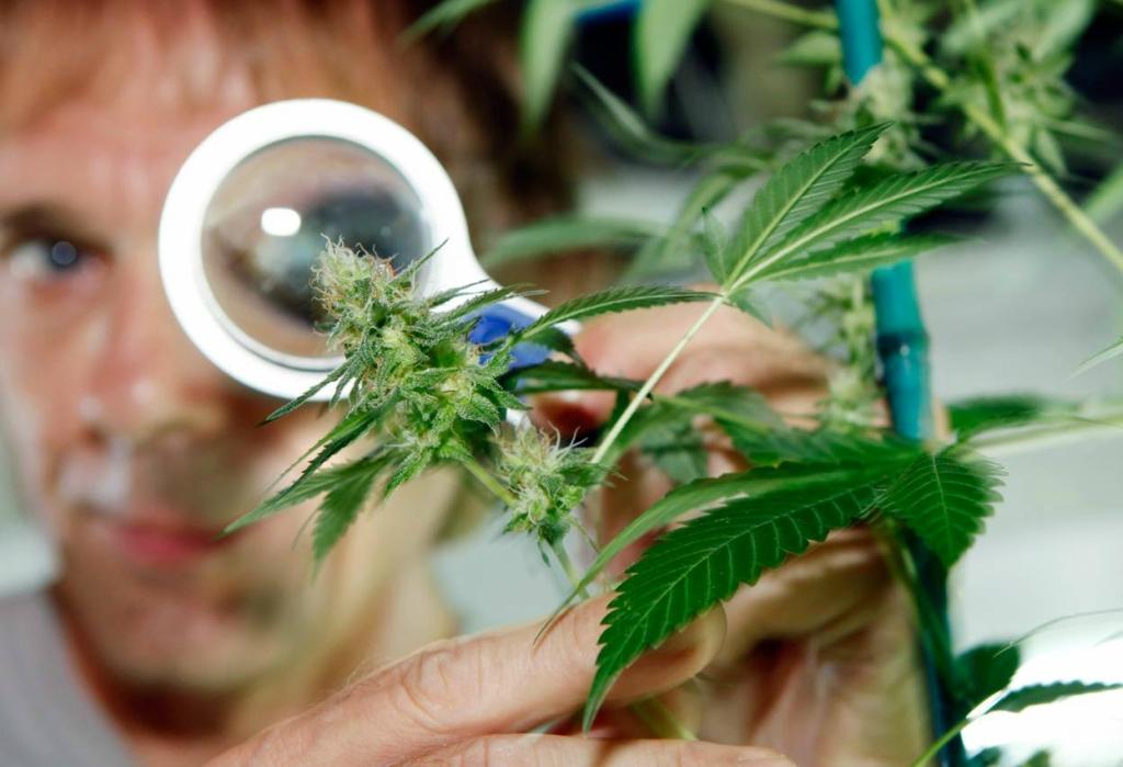 Лечение марихуана ее для больных марихуана