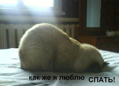 http://img-fotki.yandex.ru/get/6615/22466477.179/0_13d929_c3726899_L.jpg