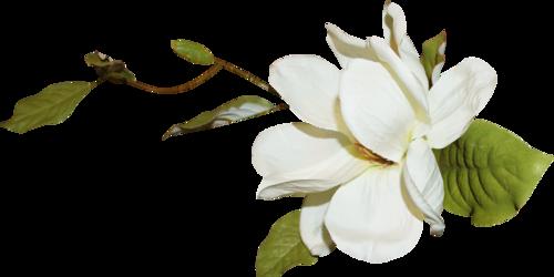 «Day Rose» 0_98239_c247babb_L