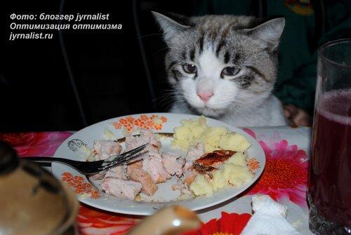 кот пытается стащить кусок мяса с тарелки фото jyrnalist
