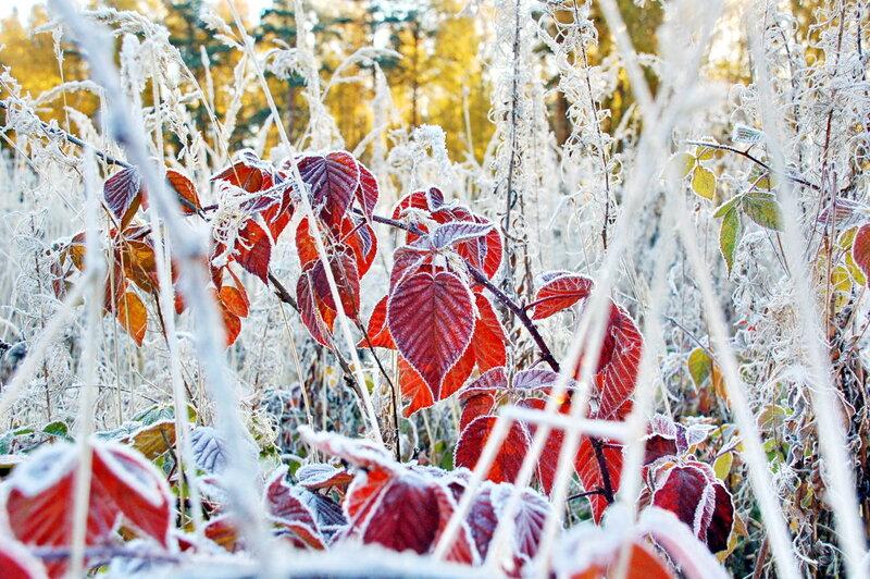 Скоро зима.jpg