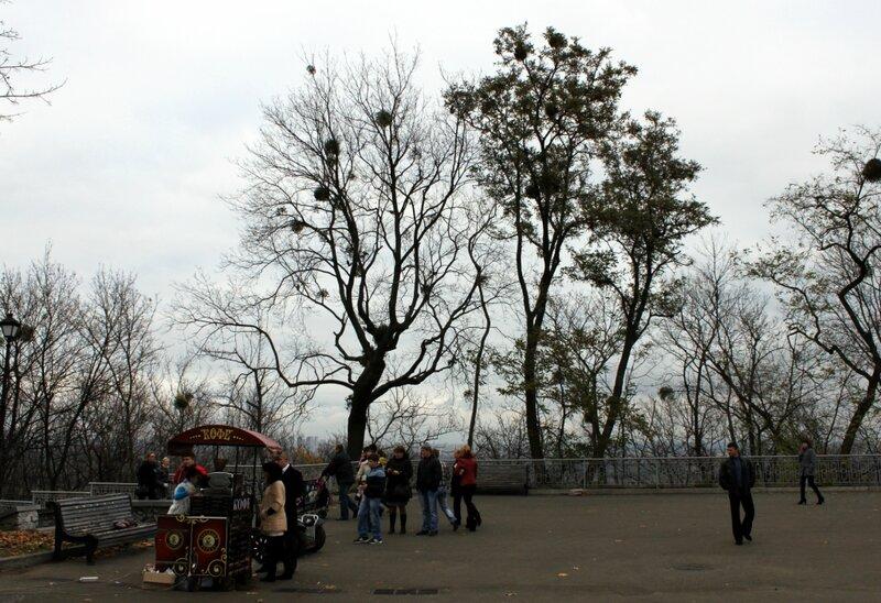 Кофейня и прокат сегвеев в Мариинском парке
