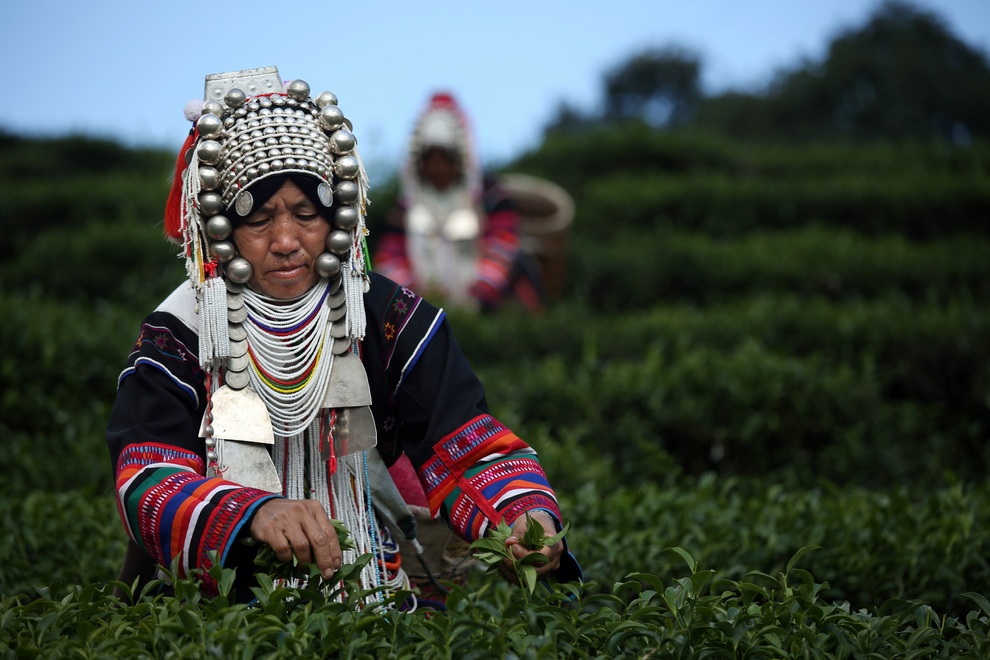 رحلة تصنيع الشاي خطوة بخطوة 0_96e4e_e609d923_ori