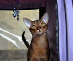 выставка кошек Магнитогорск 10,11 ноября 2012г