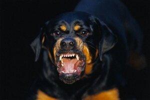 На службу в Восточный военный округ поступили караульные собаки