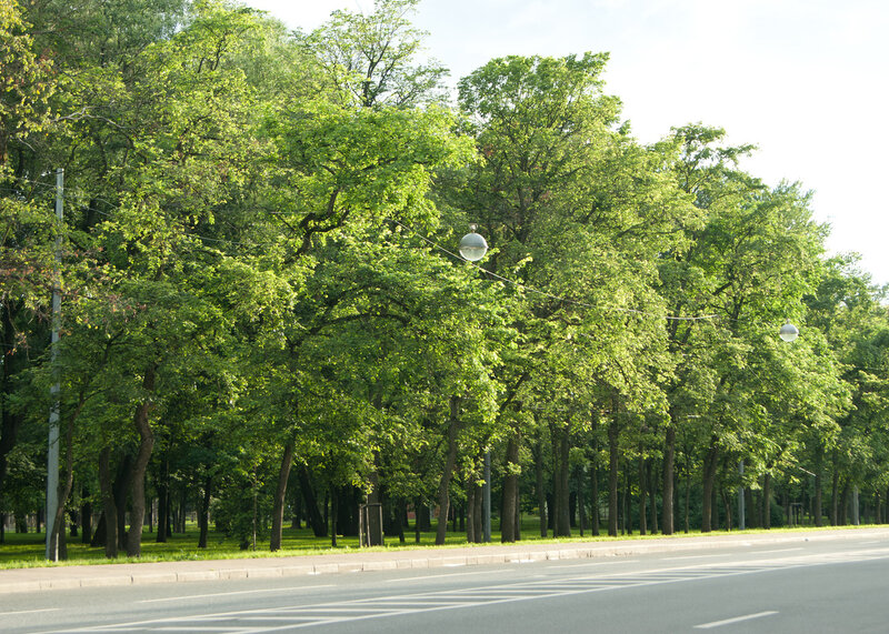 Зеленая улочка