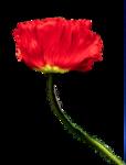 цветы (36).png