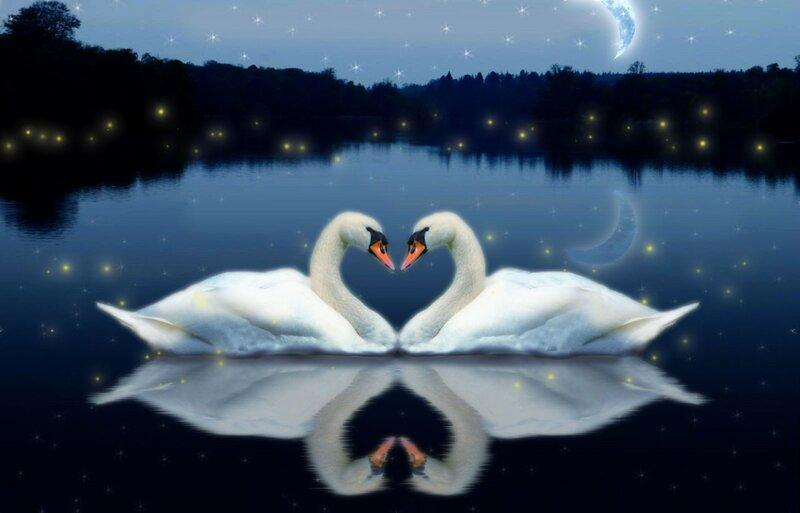 Море, спокойной ночи красивые открытки птицами и природой