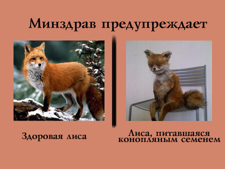 http://img-fotki.yandex.ru/get/6616/133069443.13a/0_94ed3_357ee208_XL.jpg