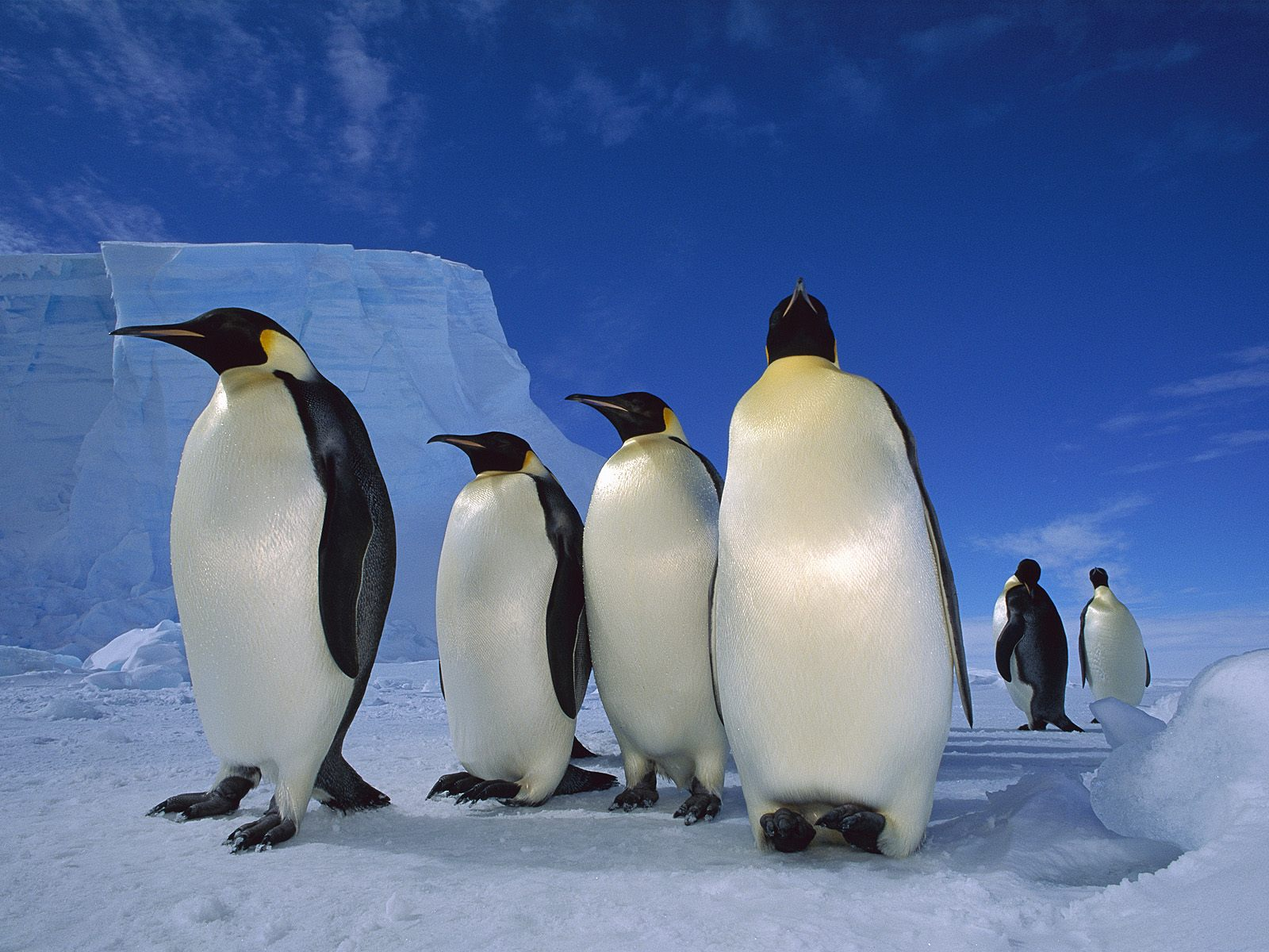 пингвины на глыбе льда  № 91298  скачать