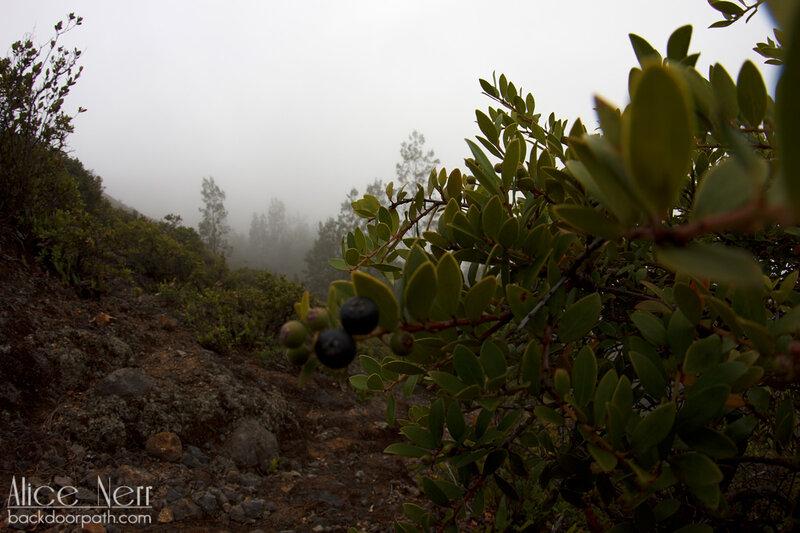 растительность возле Келимуту