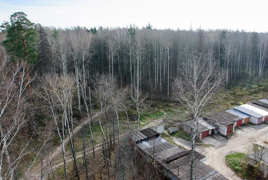 лес на шверника
