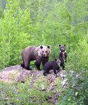 медведица с пестунами