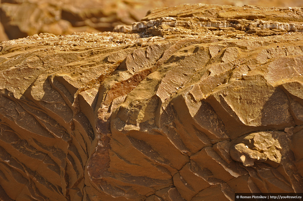 0 16172e 964b4d7a orig Национальный парк Паракас и острова Бальестас в Перу