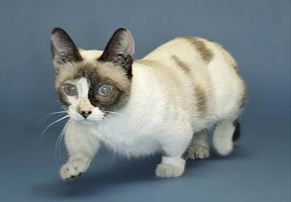 Рекорды гиннеса кошки