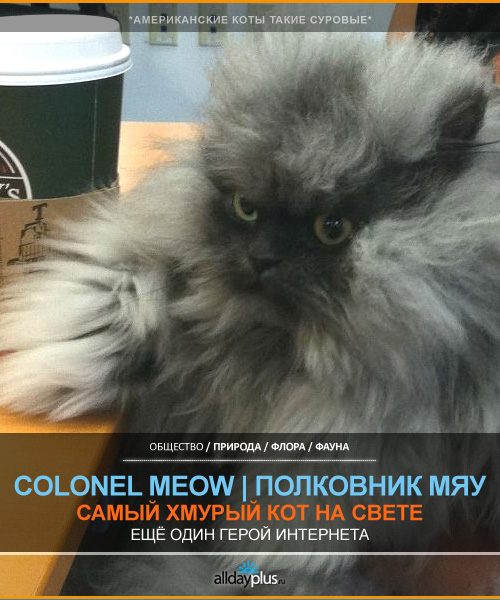 Colonel Meow / Полковник Мяу – самый суровый кот Интернета. 13 фото