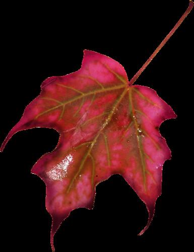 «Autumn Glow» 0_98093_b3134e3d_L