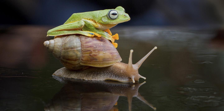 Смешное фото спящей жабы вам нужен