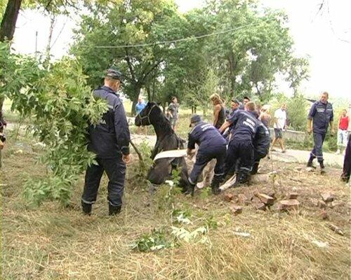 Спасатели вытащили  Ласточку