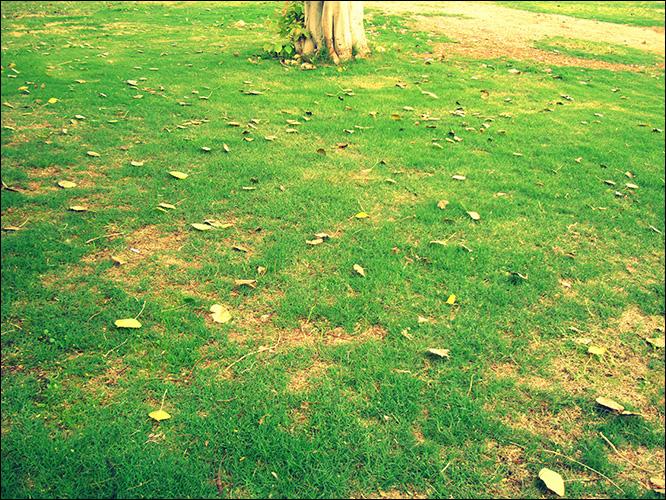 Осенний листопад в Эйлате