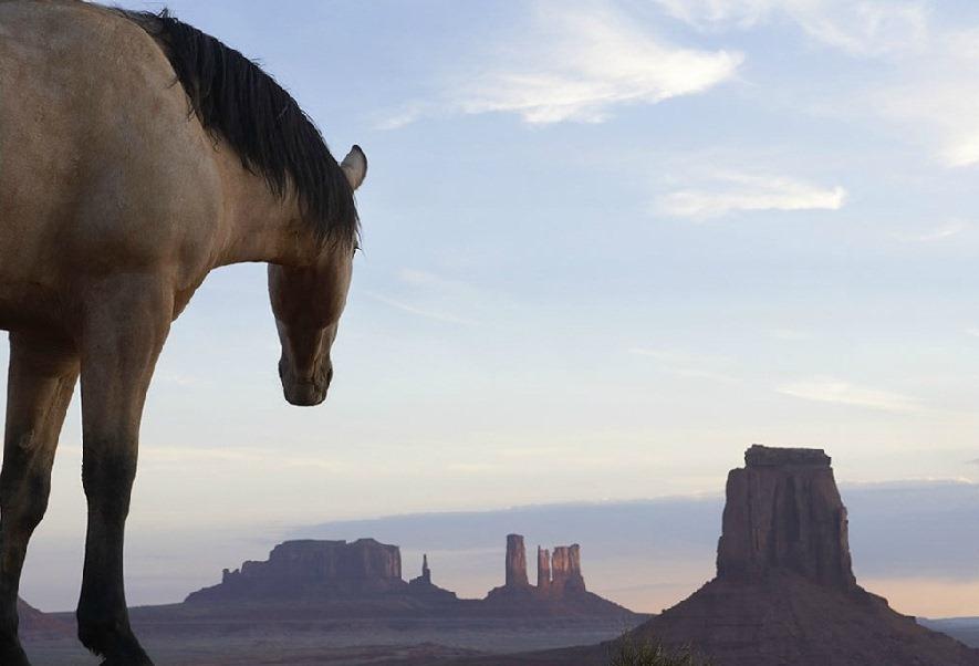 Серия фотографий «Equus». Фотограф Tim Flach