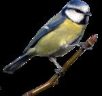 Воробьи, синицы, снегири