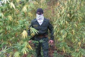В Тернейском районе Приморья наркополицейские изъяли 25 килограммов марихуаны