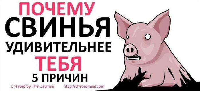 Удивительные факты о свиньях