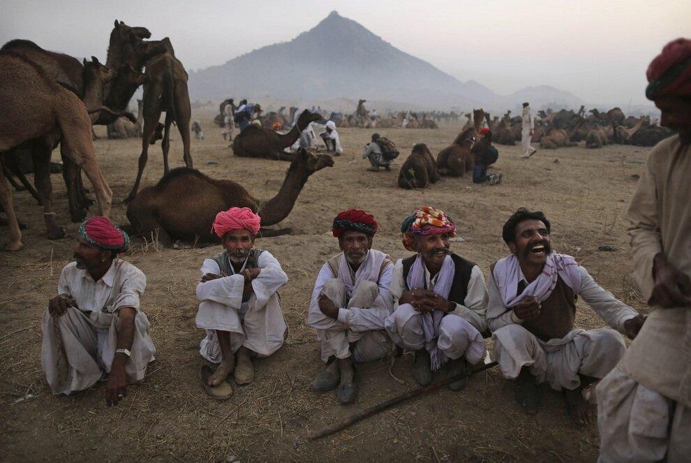 Продавцы верблюдов заманивают клиента шутками.