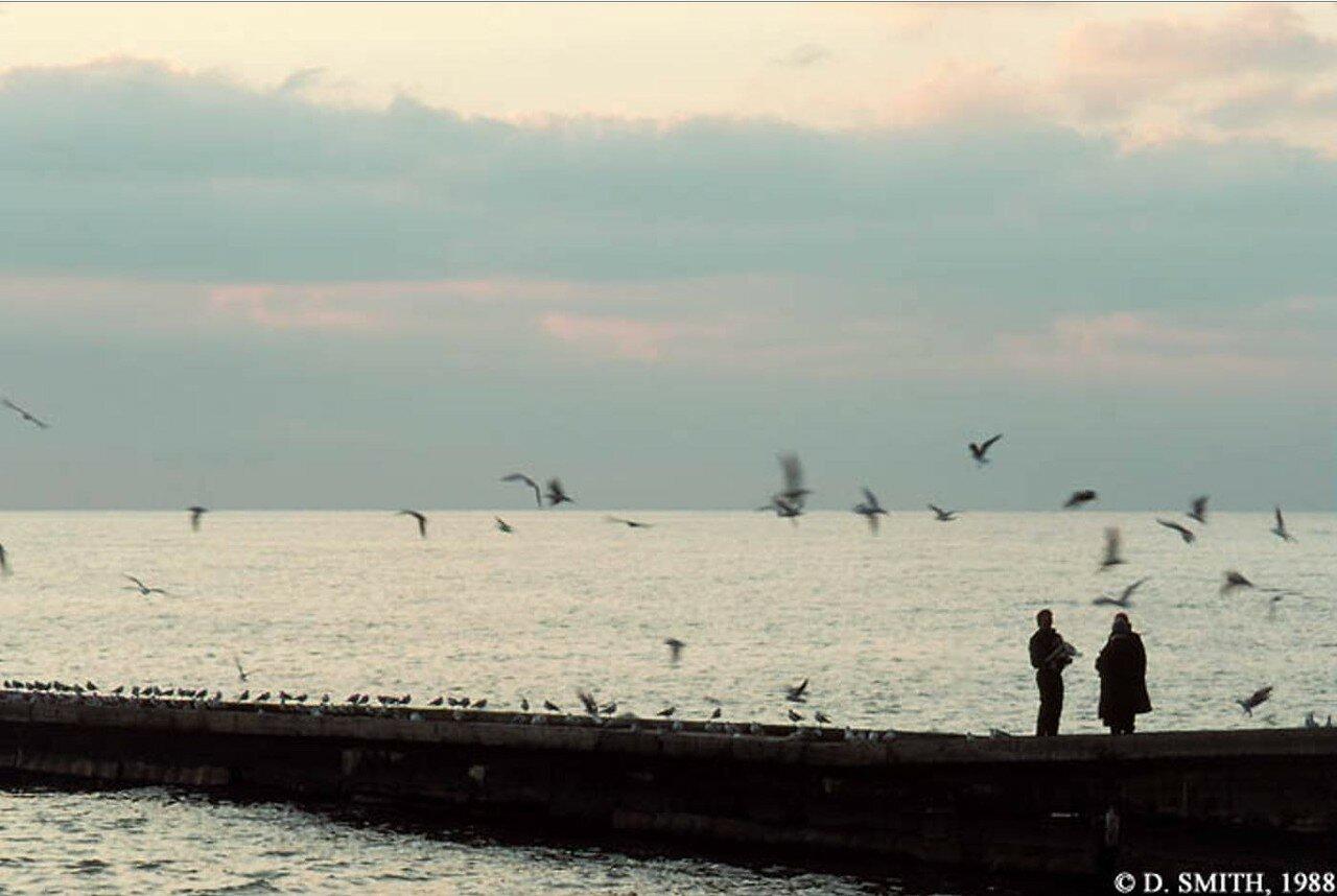 Сочи. Зима на Черном море