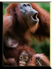 Малайзия. о.Борнео. Фото SURZet - Depositphotos