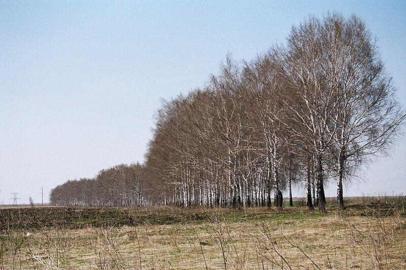 Фото связанные в лесу 28 фотография