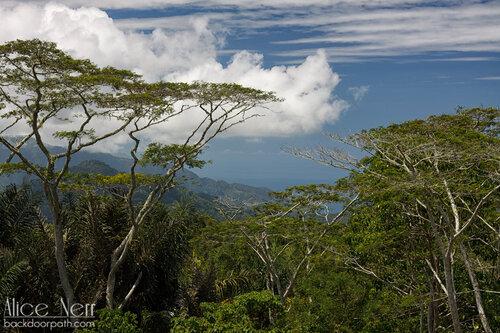 виды с дороги на острове Флорес, Индонезия