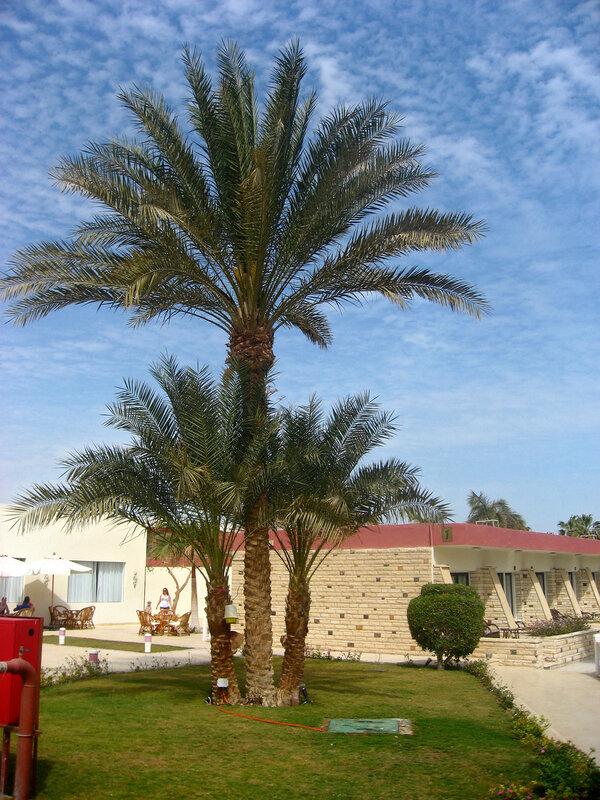 Meraki Resort 4 в Хургаде - фото и наши отзывы - Пляжи, Пальмы, Отели, Ночные, Море, Животные - hurgada, egypt