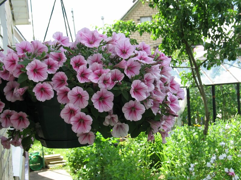 Дача – моё цветочное королевство - Gardenia ru
