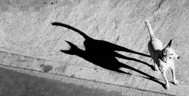 Фото «О чем говорят тени?»