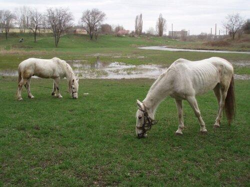 лошадки из барса привет голикову от блоггера jyrnalist оптимизация оптимизма