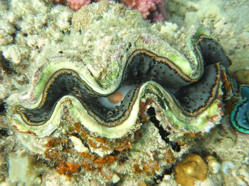 Ядовитые рыбы красного моря